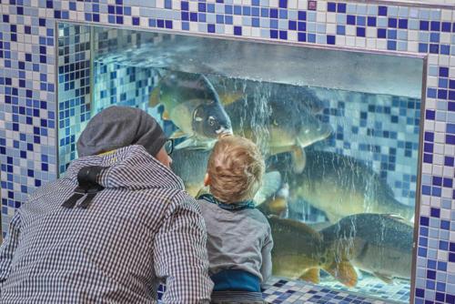 Karpfen Aquarium Fischbecken